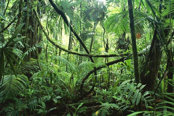 Dense Jungle